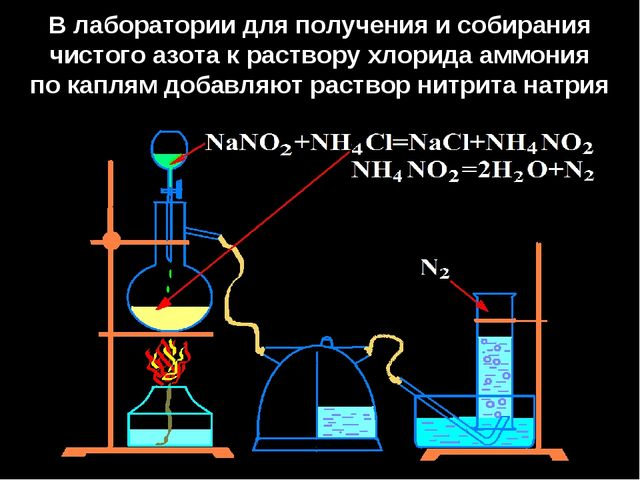 В лаборатории для получения и собирания чистого азота к раствору хлорида аммо...