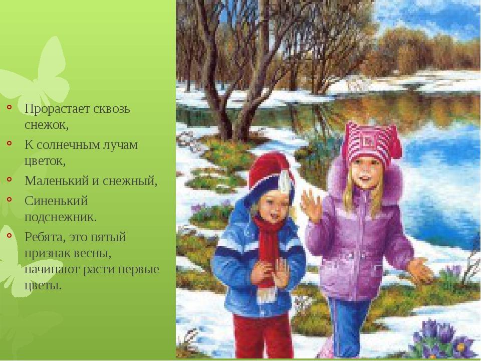 Прорастает сквозь снежок, К солнечным лучам цветок, Маленький и снежный, Син...