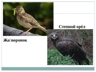 Жа́воронок Степной орёл