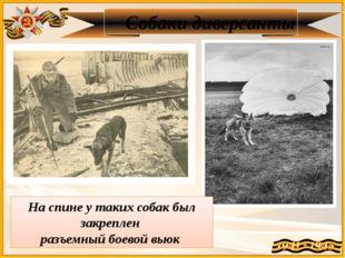Собаки диверсанты На спине у таких собак был закреплен разъемный боевой вьюк