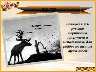 ЛОСИ Белорусские и русские партизаны приручили и использовали для рейдов по т