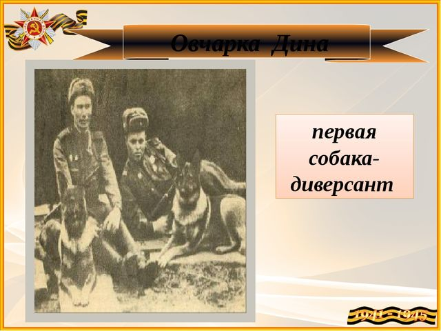 Овчарка Дина первая собака-диверсант