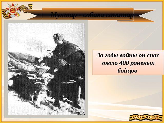 Мухтар - собака санитар За годы войны он спас около 400 раненых бойцов