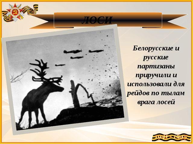 ЛОСИ Белорусские и русские партизаны приручили и использовали для рейдов по т...