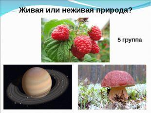 5 группа Живая или неживая природа?