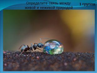 Определите связь между живой и неживой природой 1 группа