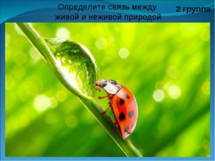 2 группа Определите связь между живой и неживой природой