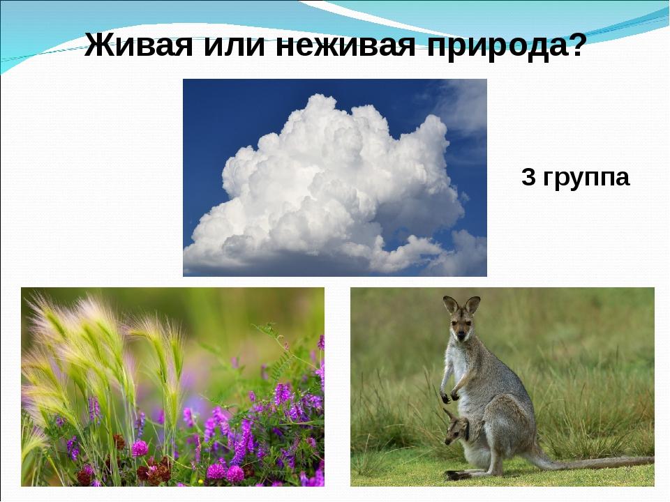 3 группа Живая или неживая природа?