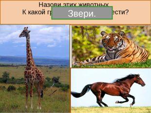 6 - Насекомые. Назовите этих животных. К какой группе они относятся. насеком
