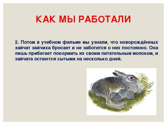 КАК МЫ РАБОТАЛИ 2. Потом в учебном фильме мы узнали, что новорождённых зайчат...