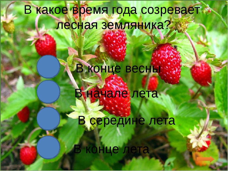 В какое время года созревает лесная земляника? В конце весны В начале лета В...