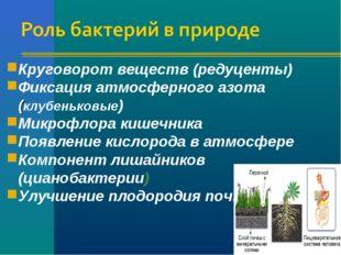 Круговорот веществ (редуценты) Фиксация атмосферного азота (клубеньковые) Мик