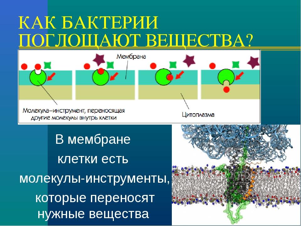 КАК БАКТЕРИИ ПОГЛОЩАЮТ ВЕЩЕСТВА? В мембране клетки есть молекулы-инструменты,...