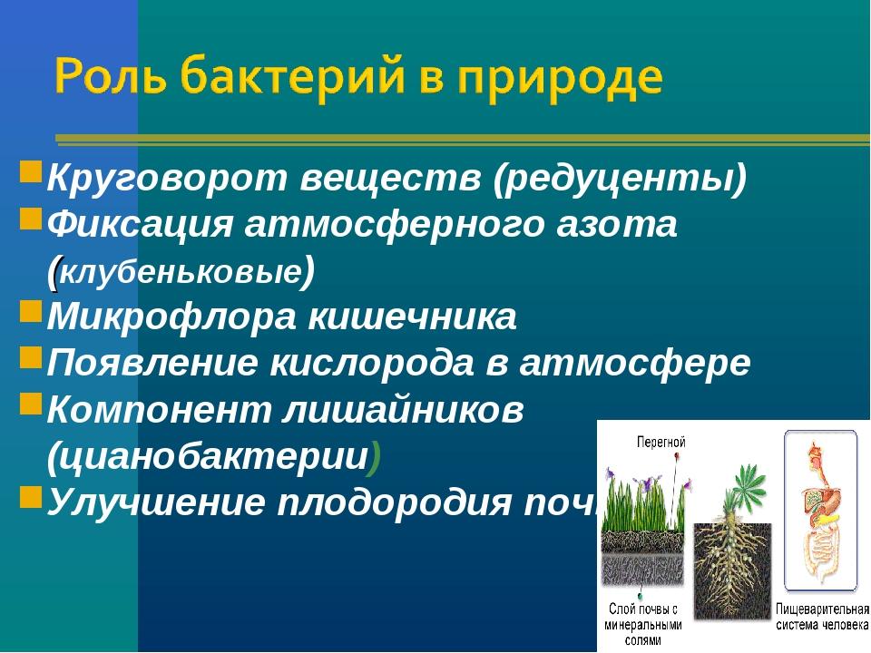Круговорот веществ (редуценты) Фиксация атмосферного азота (клубеньковые) Мик...