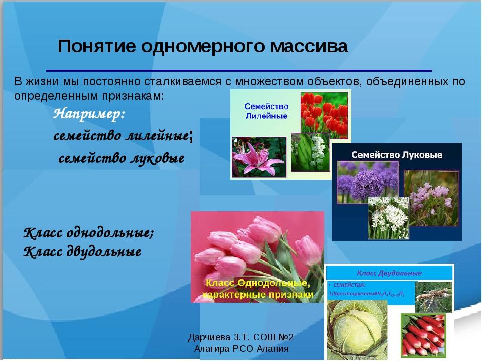 Например: семейство лилейные; семейство луковые Понятие одномерного массива К...