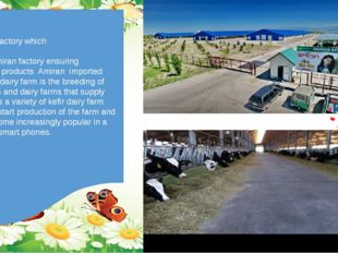 We have factory which Called Amiran factory ensuring With dairy products Ami