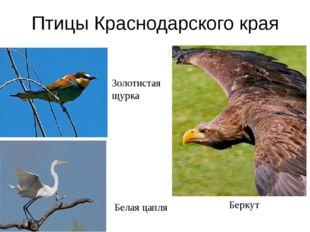 Домашнее задание Птицы в моей жизни Я в жизни птиц Значение птиц в природе Зн