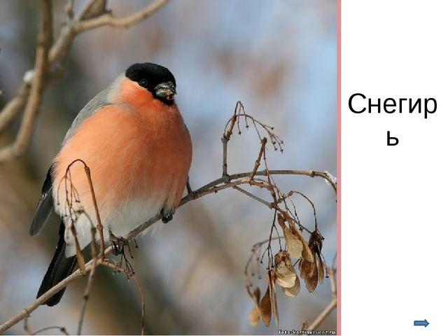 Основные мероприятия по охране птиц: установление запретов на отлов и использ...