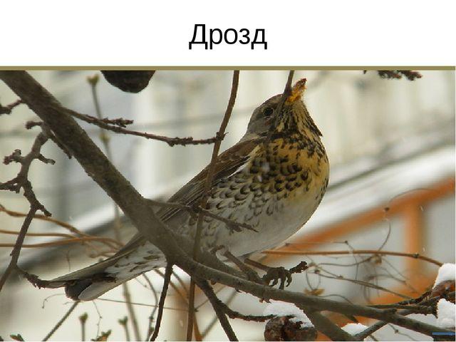 Птицы Краснодарского края Белая цапля Золотистая щурка Беркут