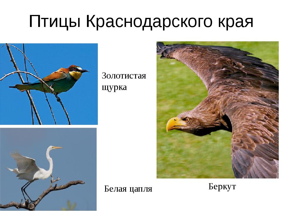 Домашнее задание Птицы в моей жизни Я в жизни птиц Значение птиц в природе Зн...