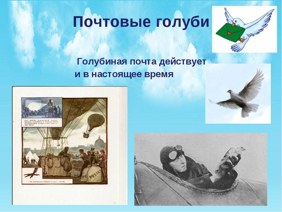 Почтовые голуби Голубиная почта действует и в настоящее время