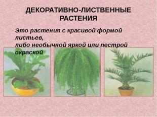 ДЕКОРАТИВНО-ЛИСТВЕННЫЕ РАСТЕНИЯ Это растения с красивой формой листьев, либо