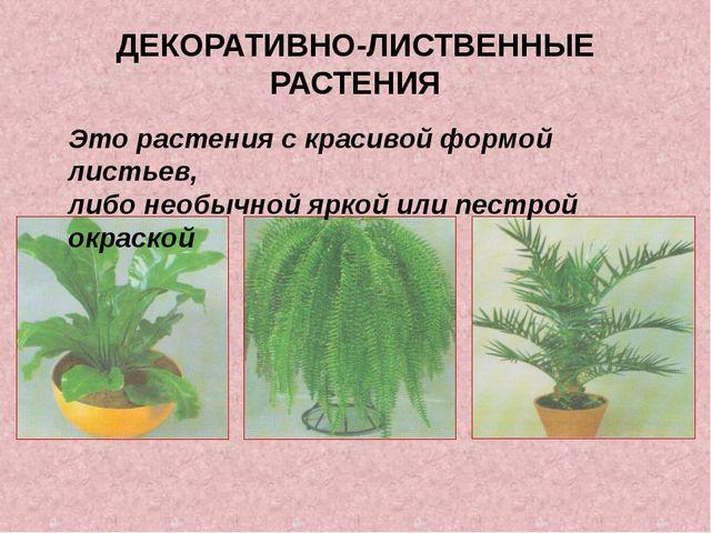 ДЕКОРАТИВНО-ЛИСТВЕННЫЕ РАСТЕНИЯ Это растения с красивой формой листьев, либо...