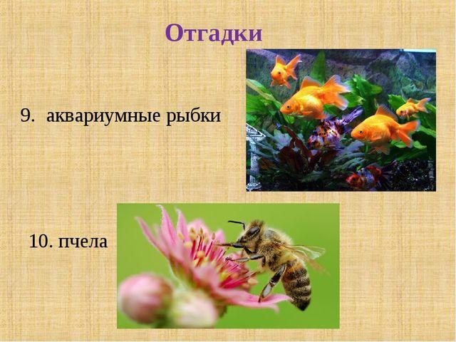 Отгадки 9. аквариумные рыбки 10. пчела