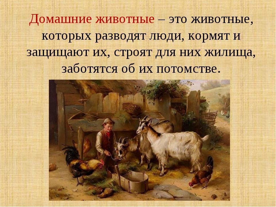 Домашние животные – это животные, которых разводят люди, кормят и защищают их...