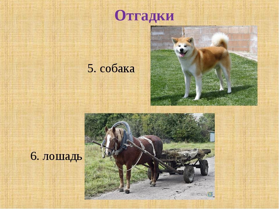 Отгадки 6. лошадь 5. собака