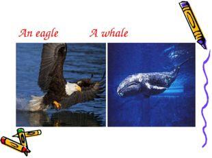 An eagle A whale