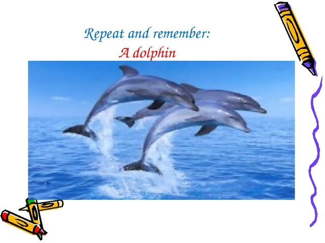 Repeat and remember: A dolphin