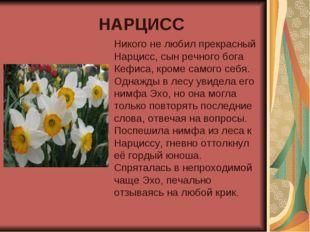 НАРЦИСС Никого не любил прекрасный Нарцисс, сын речного бога Кефиса, кроме са