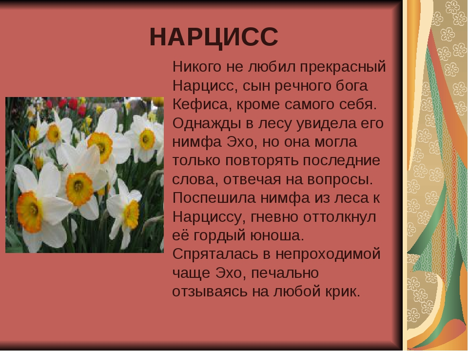 НАРЦИСС Никого не любил прекрасный Нарцисс, сын речного бога Кефиса, кроме са...
