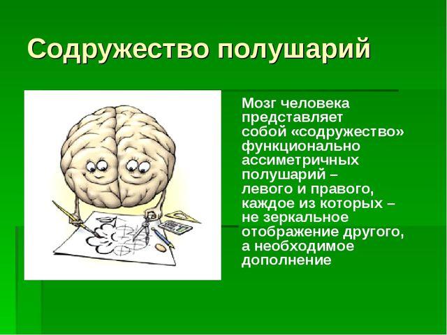 Содружество полушарий Мозг человека представляет собой «содружество» функцион...