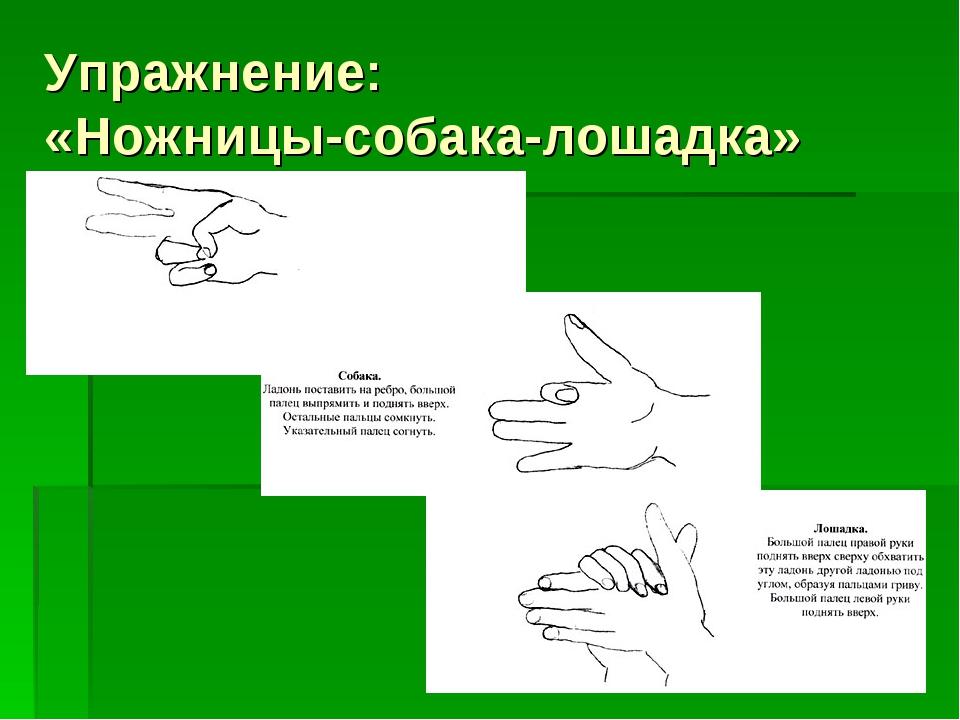 Упражнение: «Ножницы-собака-лошадка»