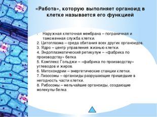 «Работа», которую выполняет органоид в клетке называется его функцией Наружна