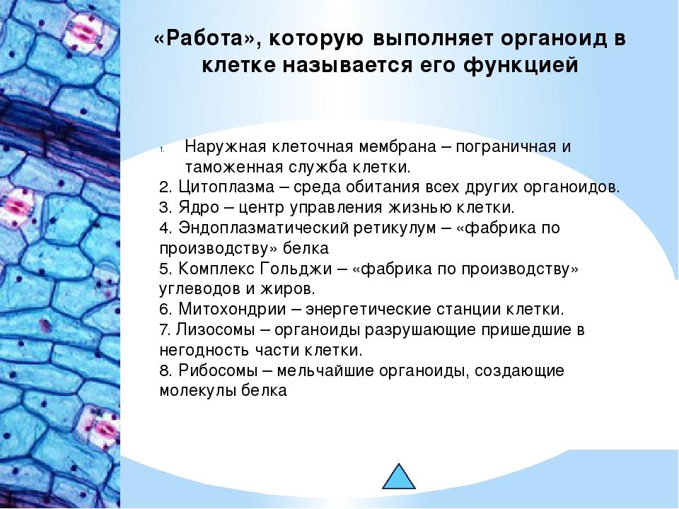«Работа», которую выполняет органоид в клетке называется его функцией Наружна...
