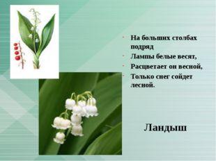 На больших столбах подряд Лампы белые весят, Расцветает он весной, Только сн
