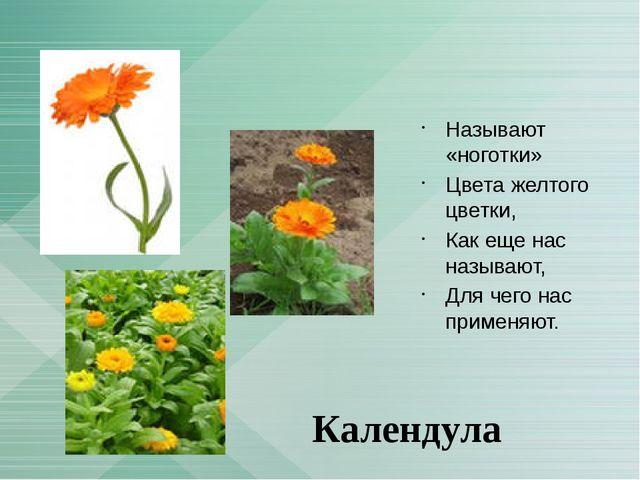 Называют «ноготки» Цвета желтого цветки, Как еще нас называют, Для чего нас...
