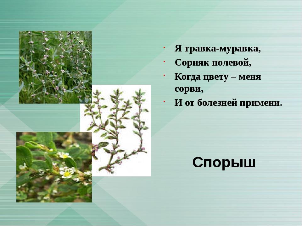 Я травка-муравка, Сорняк полевой, Когда цвету – меня сорви, И от болезней пр...