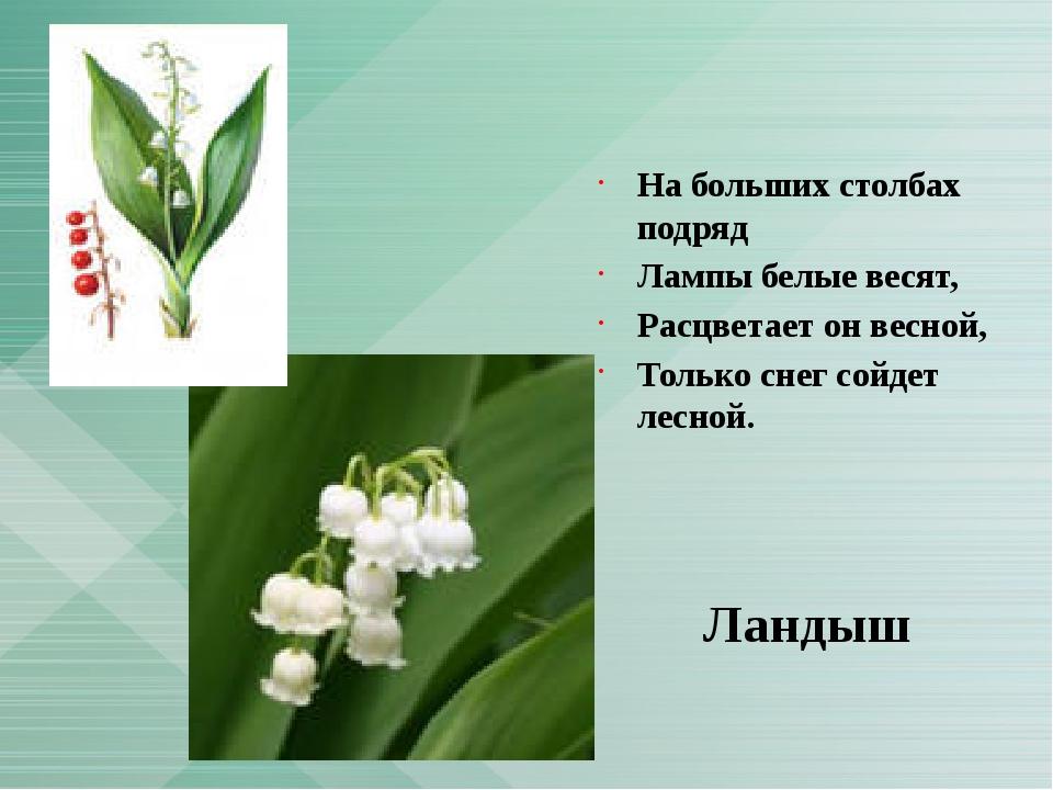На больших столбах подряд Лампы белые весят, Расцветает он весной, Только сн...