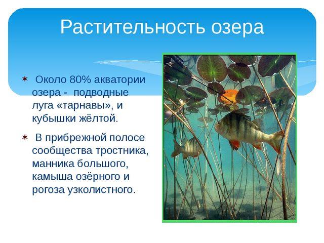 Около 80% акватории озера - подводные луга «тарнавы», и кубышки жёлтой. В пр...