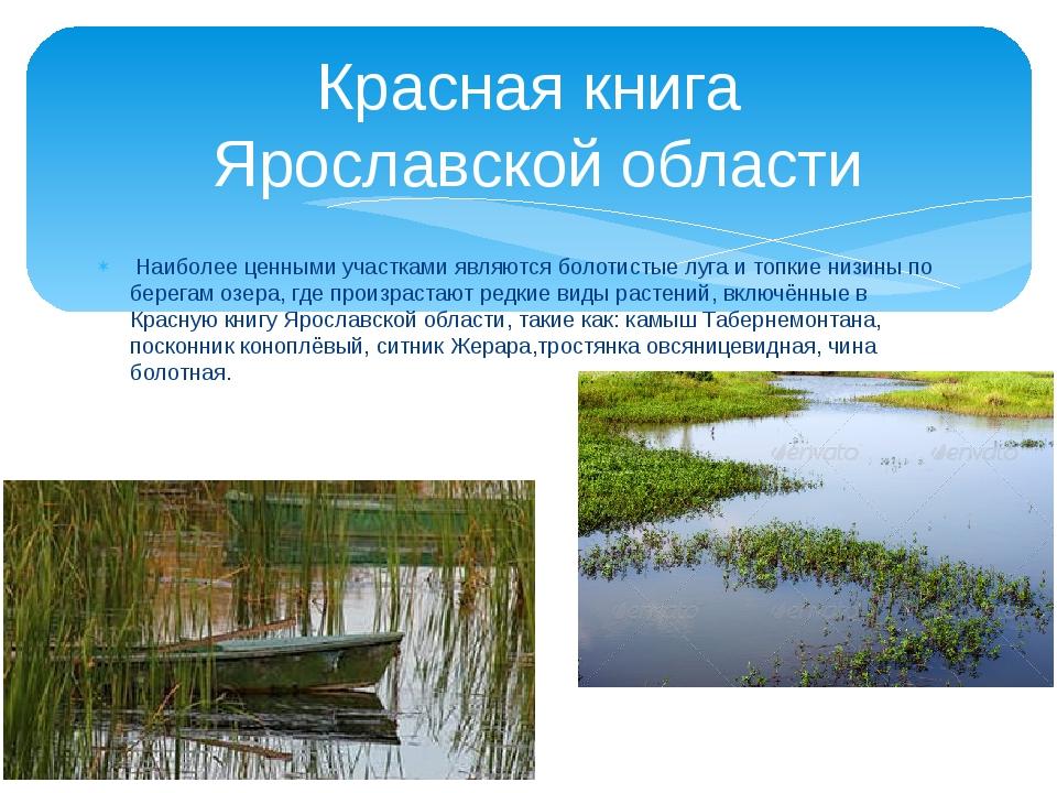 Наиболее ценными участками являются болотистые луга и топкие низины по берег...