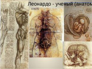 Леонардо - ученый (анатом)