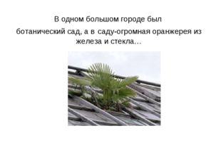 В одном большом городе был ботанический сад, а в саду-огромная оранжерея из ж