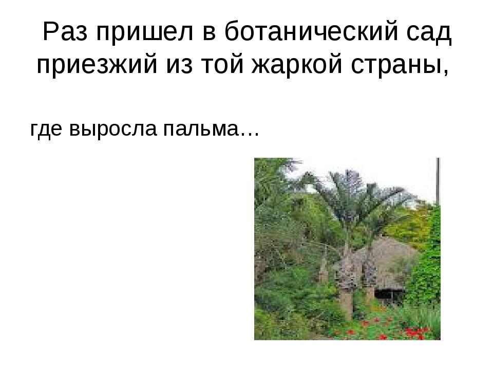 Раз пришел в ботанический сад приезжий из той жаркой страны, где выросла паль...
