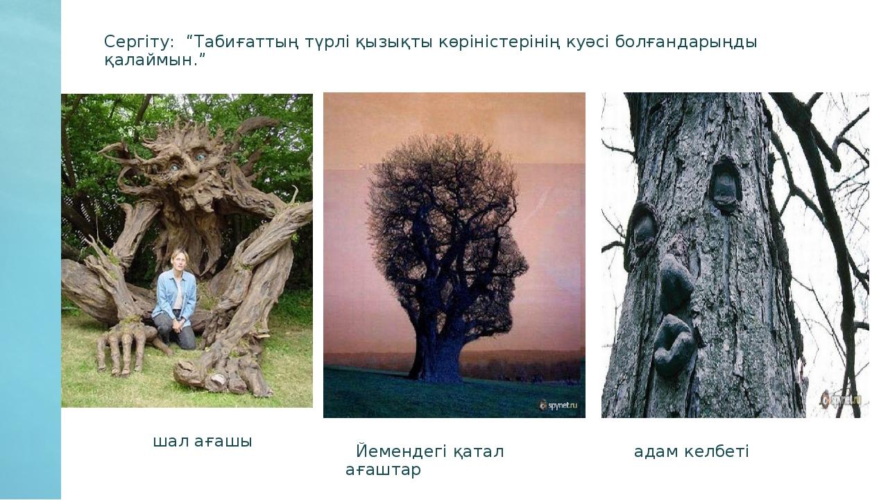 """шал ағашы Йемендегі қатал ағаштар адам келбеті Сергіту: """"Табиғаттың түрлі қы..."""