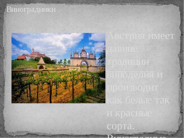Австрия имеет давние традиции виноделия и производит как белые так и красные...