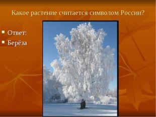 Какое растение считается символом России? Ответ: Берёза